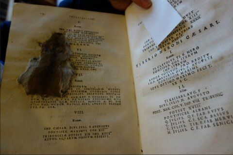 Ratón de bibliotecaFuente indeterminada