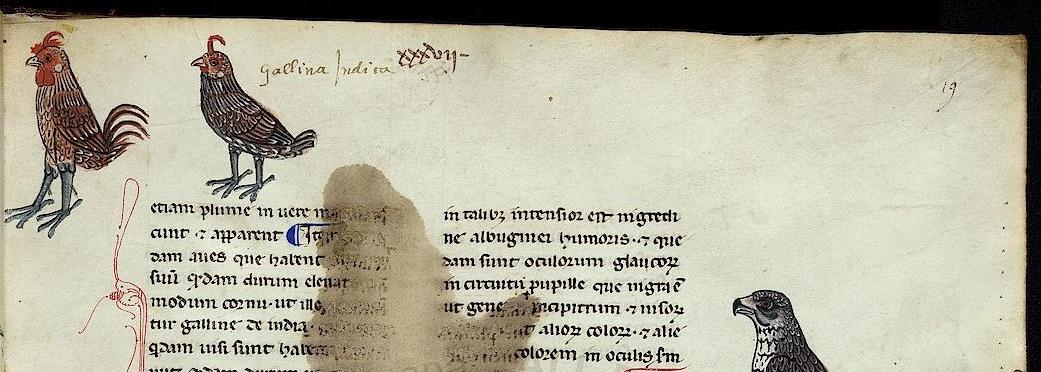 Pal. Lat. 1071, fol. 19r, detalle. Picado para el pautado en el margen derecho